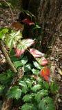 Draaiende bladeren Stock Fotografie