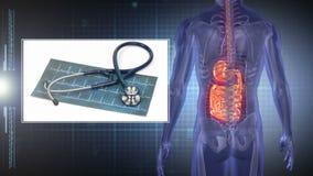 Draaiende menselijke vorm die organen met montering van medische klemmen tonen stock videobeelden