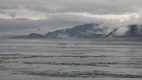 Draaikolk van water van Vreedzame Oceaan op verbazende landschappen als achtergrond Alaska stock video