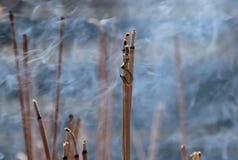 Draak baswierook met rook Stock Foto's