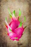 Draakfruit vers van de boom Royalty-vrije Stock Fotografie
