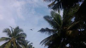 Draakvlieg die in de hemel vliegen Royalty-vrije Stock Fotografie
