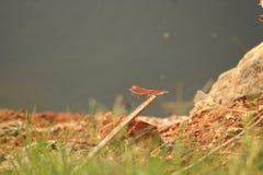 Draakvlieg die in een veilige plaats rusten stock fotografie