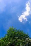 Draakwolk met de groene boom stock afbeeldingen