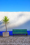 Dracaena cornstalk plant and a bench in front of a blue and white wall. Obidos, Portugal. Dracaena cornstalk tropical plant and a wooden bench in front of a Stock Photography