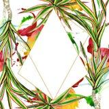 Dracaena marginata tricolor Akwareli tła ilustracji set Ramowy rabatowy ornamentu kwadrat royalty ilustracja