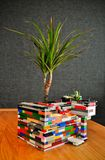 Dracaena planted in the toy blocks royalty free stock images