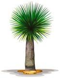 Dracaenadraco Royalty-vrije Stock Afbeeldingen