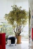 dracaenaväxtreflexa Royaltyfri Fotografi