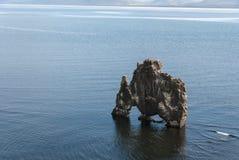 Drache, der in Island trinkt lizenzfreies stockbild