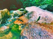 Drachefliege, die auf dem Felsen mit schöner Flussansicht sitzt lizenzfreie stockbilder