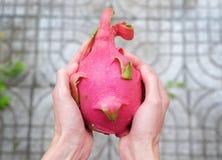 Drachefrucht in den Händen stockfotos