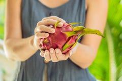 Drachefrucht in den schönen weiblichen Händen auf einem grünen Hintergrund lizenzfreie stockfotos
