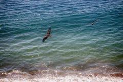 Drachen fliegen über Ufer von Arabischem Meer Stockfotos