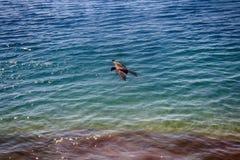 Drachen fliegen über Ufer von Arabischem Meer Lizenzfreies Stockbild