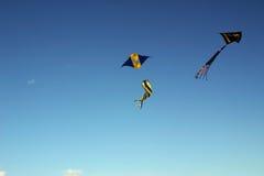 Drachen-Flugwesen Lizenzfreies Stockbild
