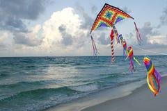 Drachen-Flugwesen auf einem Florida-Strand stockbilder