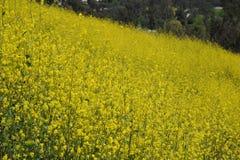 Drachen-Hügel-wilde Blumen, Aliso Viejo, CA, USA Lizenzfreies Stockfoto
