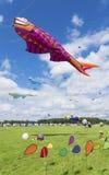 Drachenfestival Stockfoto