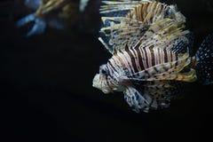 Drachenköpfe im Meer Lizenzfreies Stockbild