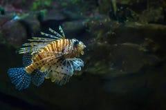 Drachenköpfe im Meer Lizenzfreies Stockfoto