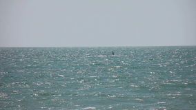 Drachensurfer im Ozean stock video footage