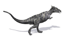 Dracorex Стоковые Изображения