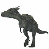 Dracorex Dinosaur over White Royalty Free Stock Photography
