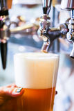 Draft beer Royalty Free Stock Photo