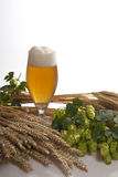 Draft beer with hops Royalty Free Stock Image