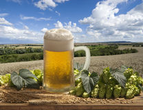 Draft beer with hops Stock Image