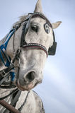 Draft horse Royalty Free Stock Images