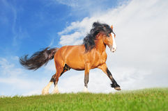 Draft horse on the field. The draft horse on the field royalty free stock photography