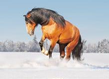 Draft Horse In Snow Stock Photo
