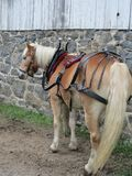 Draft horse ready to pull. Draft horse ready to go Stock Photography