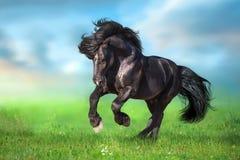 Draft horse run gallop on green meadow. Black draft horse run gallop on green meadow against blue sky stock photos