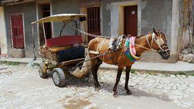 Draft horse with trailer at work in Trinidad, Cuba stock image