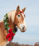 Draft horse wearing a Christmas wreath Stock Image