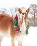 Draft horse wearing a Christmas wreath Stock Photo