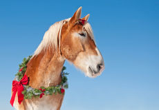 Draft horse wearing a Christmas wreath Stock Images