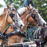 Draft Horses. In full harness at a country farm fair Royalty Free Stock Photos