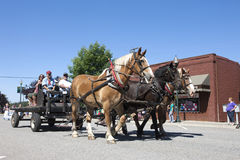 Draft horses in parade. Royalty Free Stock Photography