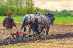 Draft Horses pull a plow guided by a man Stock Photos