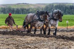 Draft Horses pull a plow guided by a man Stock Images