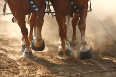 Draft Horses Pulling a Wagon. Close-up on the hooves of draft horses pulling a wagon through a dusty field Royalty Free Stock Photos