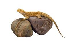 Dragão & rochas Imagem de Stock