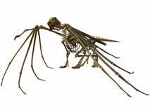 Dragão de esqueleto Imagens de Stock