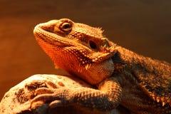 Dragão farpado Imagens de Stock Royalty Free
