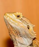 dragão farpado Imagem de Stock Royalty Free