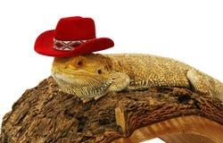 Dragão farpado com chapéu Fotos de Stock